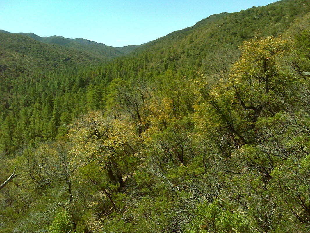 chaparral biome Topic overview: chaparral the chaparral is also known as the mediterranean shrubland the chaparral has a warm, dry climatenearly all of the rain there falls during 2-4 months in the winter.